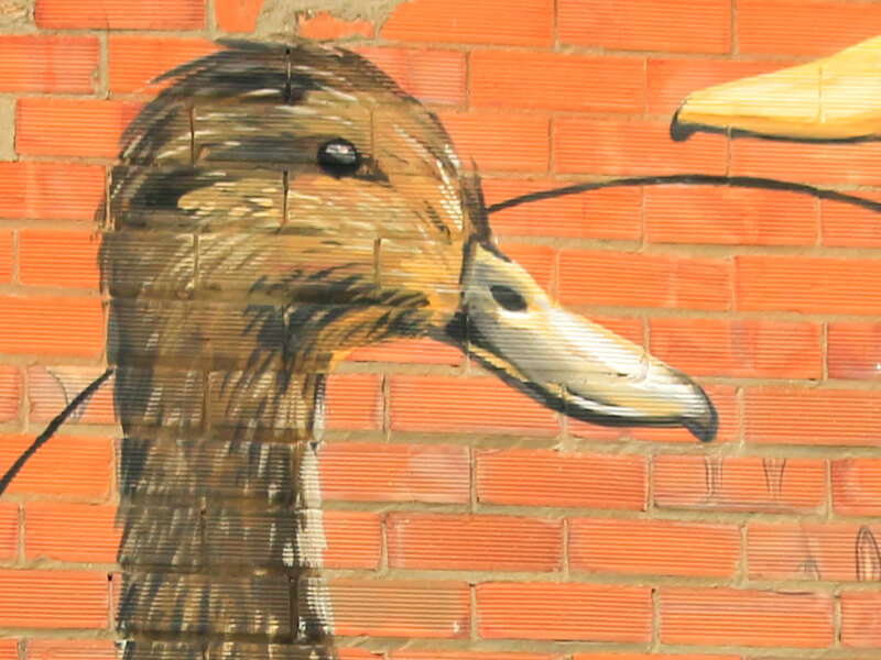 anec-collverd-enciclopedia-mural-1