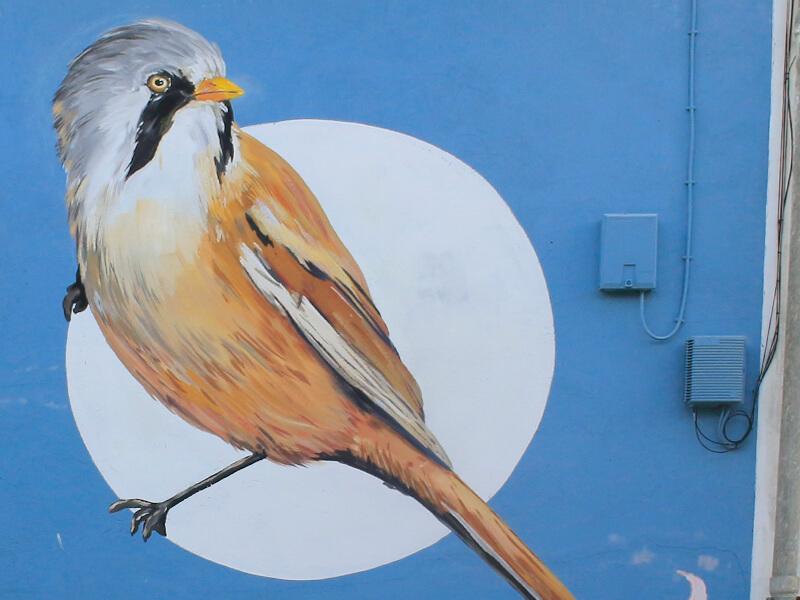 marellenga-de-bigotis-enciclopedia-mural-4